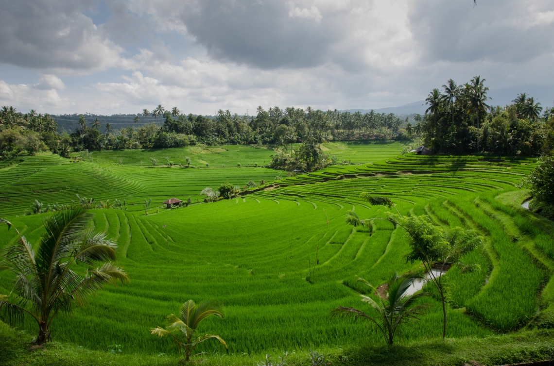 Paddy-Field-On-Bali-license-free-CC0