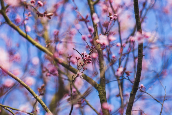 Spring Allergy - How to cope with spring pollen allergy